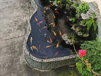今盛美-鱼塘